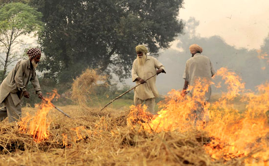 How Punjab`s Misplaced Agricultural Priorities Contribute To Delhi`s Pollution
