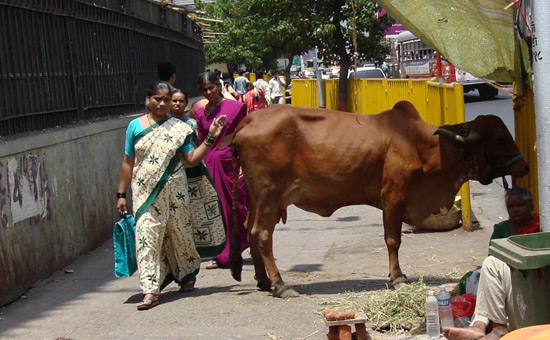 Tamil Nadu Government`s scant regard for Cow Protection
