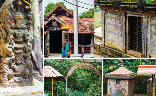 Enter the Sacred Kavu Groves of Kerala