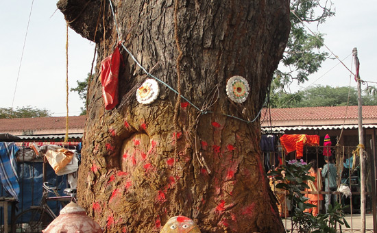 Sacred Trees of the Hindus
