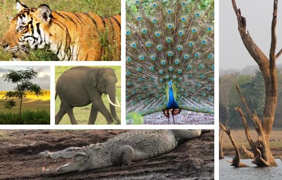 Nagerhole National Park - A Jewel in the crown of the Nilgiri Biosphere