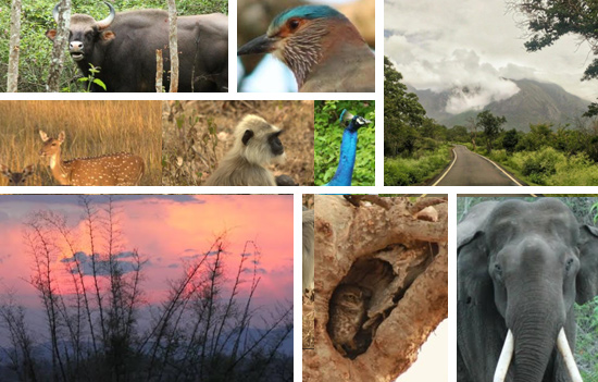 BANDIPUR National Park-The Wild and the Wonderful