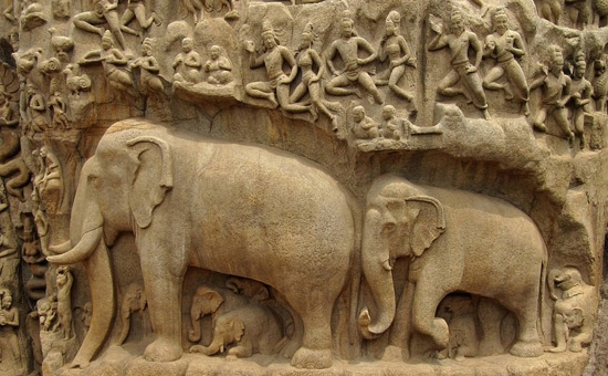 Animals in Indian Culture create an `inclusive universe`