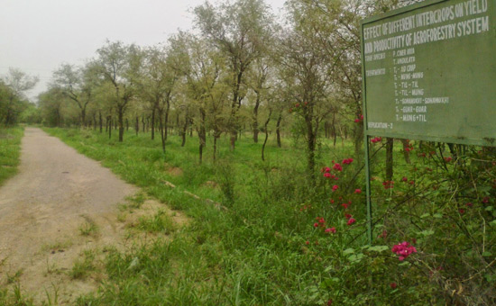 Transformation of Wasteland into Greenbelt in Jodhpur