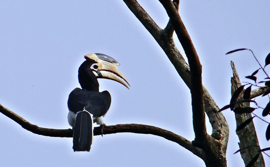 The little known birdlife of Konkan