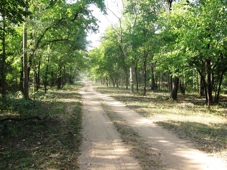 Barnawapara - Near the resort through forested roads from Raipur. It took us approximately 1 hour by car to reach Barnawapara. Chhattisgarh is the most beautiful yet unexplored. 