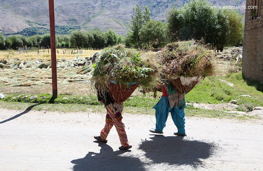 Be it Panikhar, Kumaon or Arunachal seen ladies with grass on their backs everywhere.