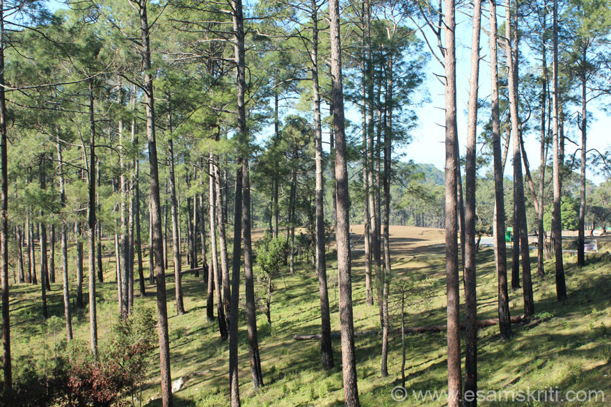 At one end of the golf course are pine trees. Centre of golf course is a road that you see on right of pic. It connects Raniket with Almora.