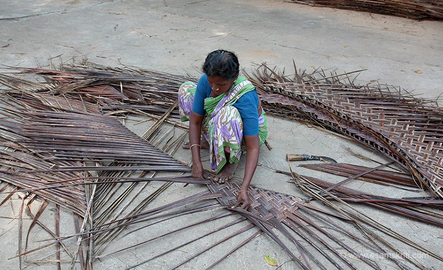 Villager  weaving the leaves of a coconut tree into a mat. These mats are used to build huts, shades.