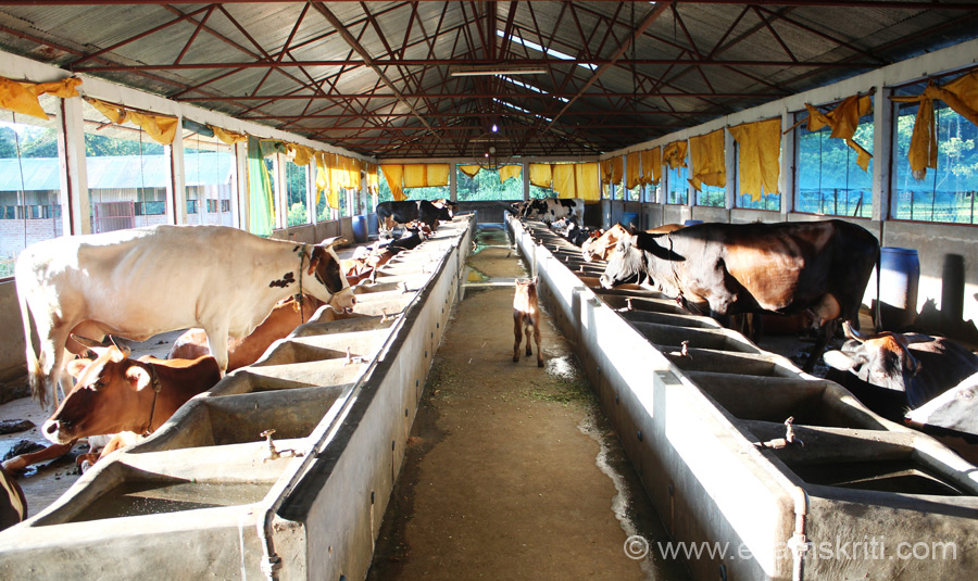 School has cows so milk is sourced inhouse. School has an indoor Swasti hospital with 30 beds, X-ray and Pathological tests are done. The mobile medical unit serves nearby villages thrice a week.