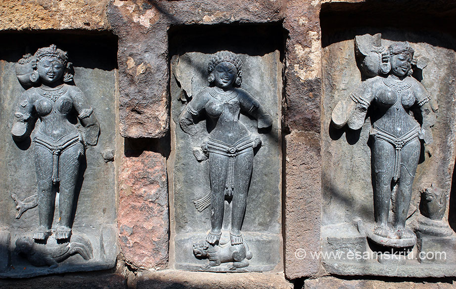 Left to right is Yogini no 11 Kamayani. 2 armed figure. There is a cock on her pedestal she is adorned with various ornaments. Braid of hair is to be right side known as kesa-bandha. She is standing in a dvibhanga pose. Centre is Ghatabari. 2 armed figure mounting on a lion. She has curling hair over her head with various ornaments. Known as Karanda-Mukuta. She stands in a dvibhanga pose. Right is Yogini no 45 Stutee. A 4 armed figure mounting on a haladi kathua (pot for turmeric paste). There is also a flower vase on the pedestal. Braid of hair is to the right with flower garland adorned with various ornaments with mukuta. She is standing in a samabhanga pose.