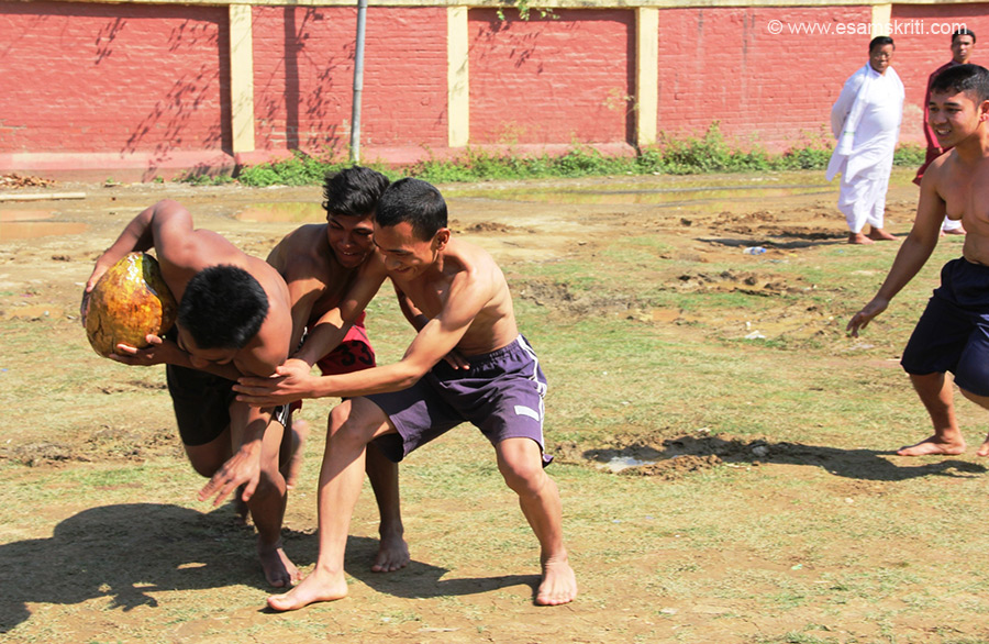 Two Youths snatching Yubi (Coconut ),the traditional Game was played before the King and the winners were awarded rewards. Manipur has an amazing range of local games. To see pics of Manipuri local games at Sangai Festival 