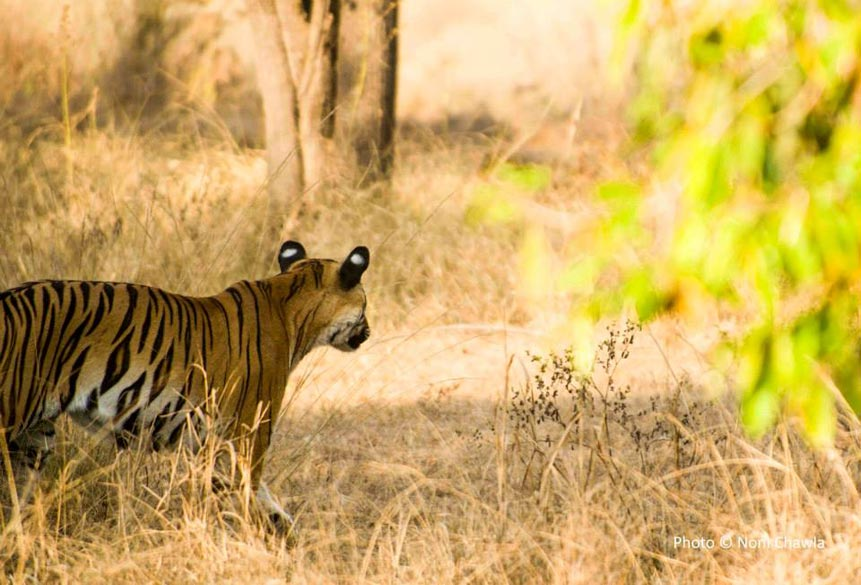 "Hmmm, I smell food..... — at Tadoba - Andhari Tiger Reserve. To see some good pictures and read about Tadoba  <a href=""http://tadobapictures.blogspot.in/"" target=""_blank"">Click here</a>"