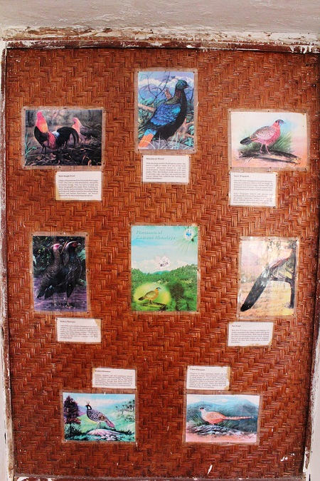 The KMVN guesthouse has a board which gives information on local birds. The Guide says that he will show you local birds but did not see any guide doing so. May be that day there 