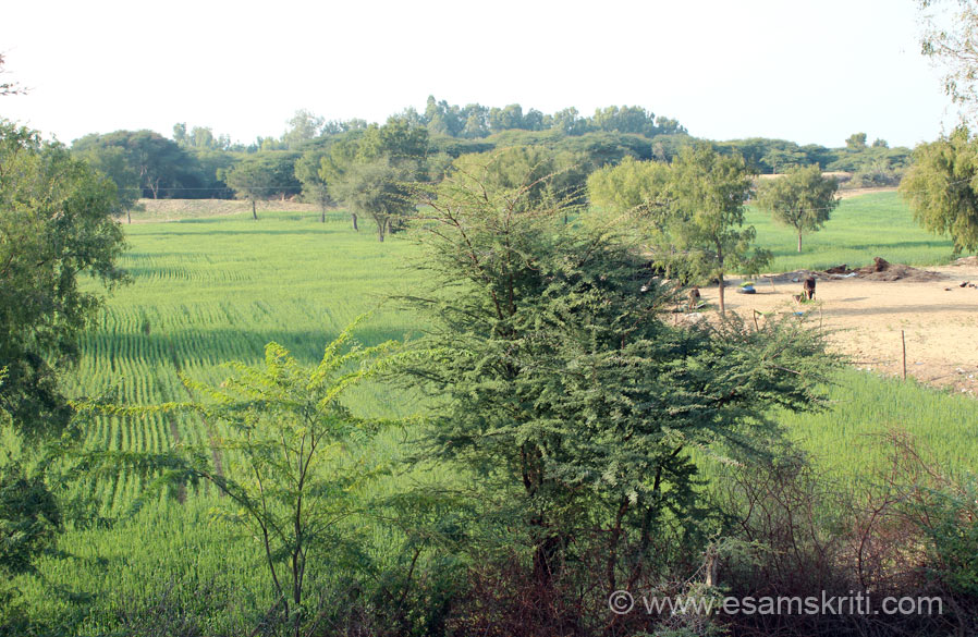 Another view of the green fields. I just loved them so much. Visit made me realize the importance of WATER. Yet number of us do not value and waste it. To know more about