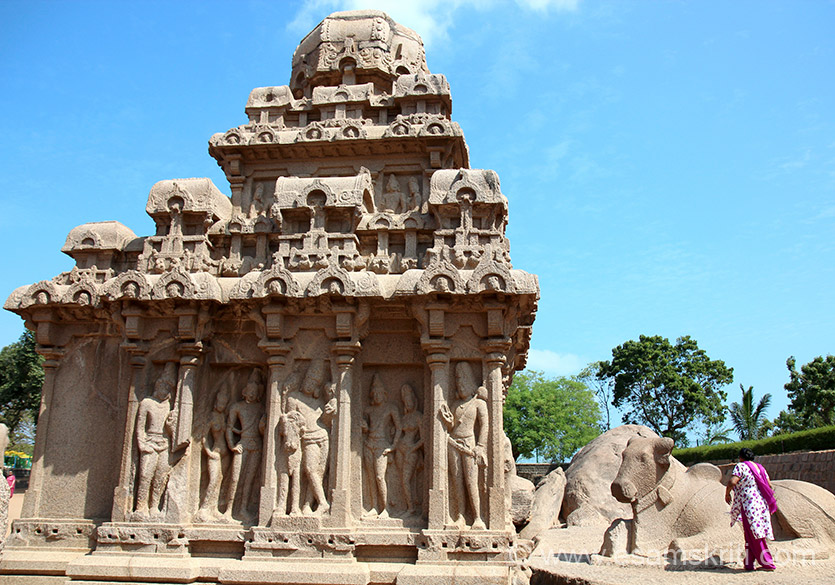 Side view of Arjuna-ratha. Vrishabhantiks flanked by royal attendants. See half finished Nandi on right of pic and sculptures on temple wall. Of the 4 Pallava rulers between 580-728, the name of Mahendravarman has come down as the pioneer of south Indian temple architecture and painting. He was a Jain but became a Saivite later. He dotted north-eastern Tamil Nadu with rock-cut Siva temples esp. imp is the rock-cut temples at Trichy. His son Narasimhavarman I was as great a contributor to art and rock-cut architecture / sculpture.