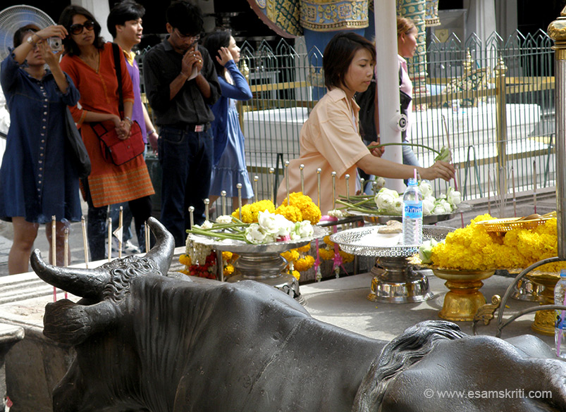 Thai devotees praying to Lord Buddha. They dipp lotus buds in water for luck.