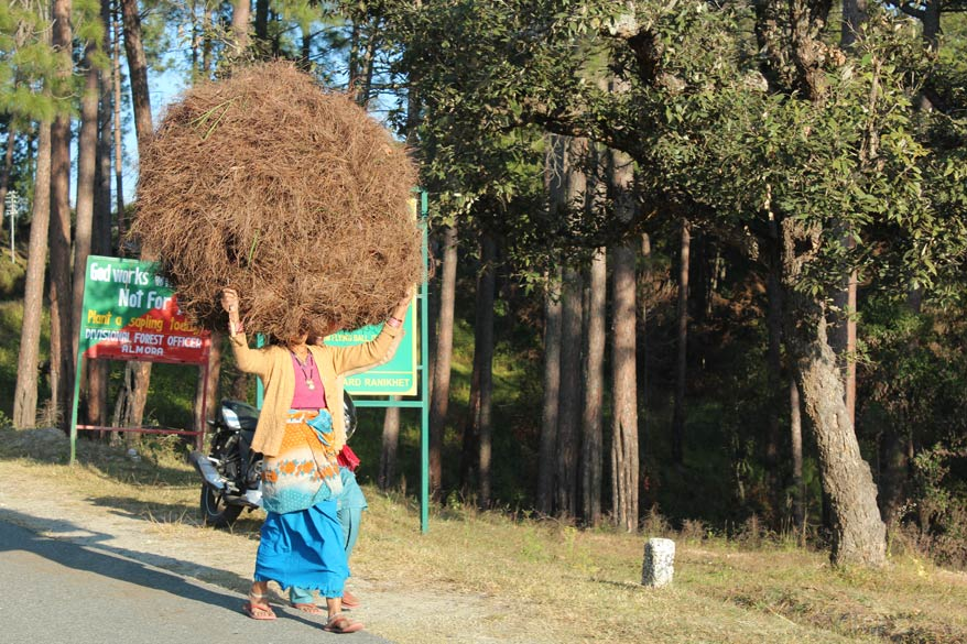 In Raniket area women carry the grass on their heads unlike Tawaghat area where grass is carried on the back.