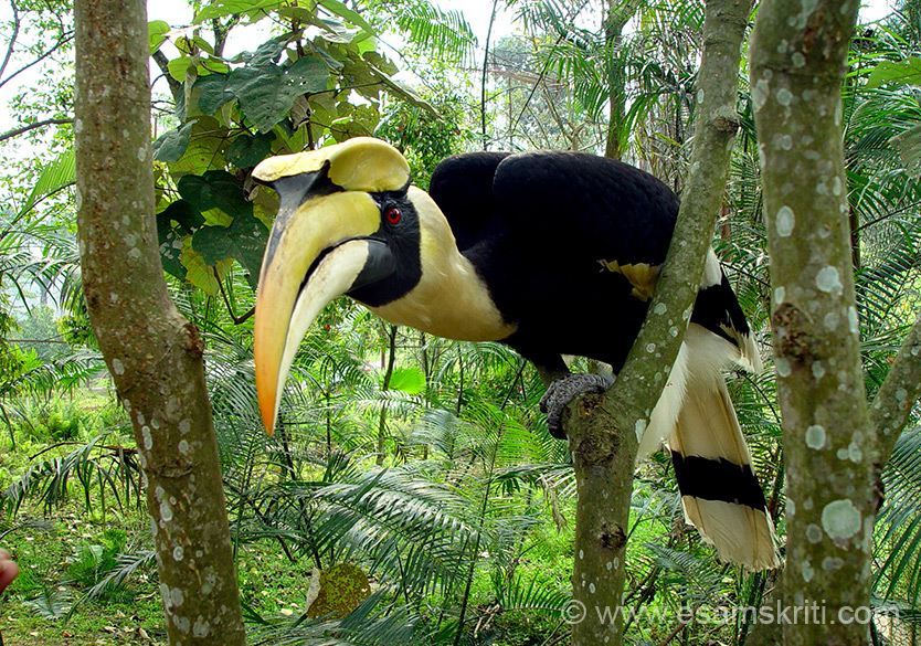State bird Hornbill. Pic courtesy and copyright DIPRO.