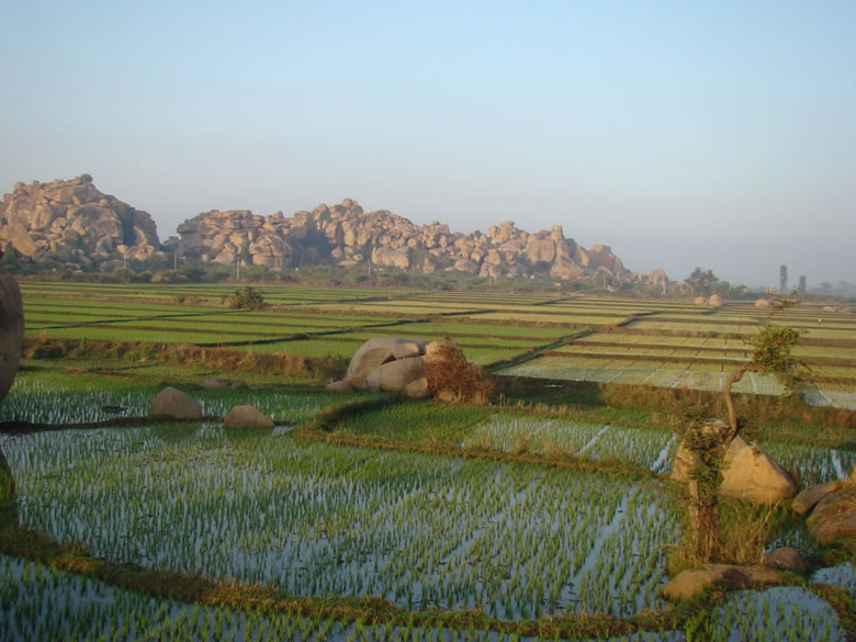 Another super breadthtaking view of rice fields. Thanks to the Tungabhadra river and a network of dams water seemed to be in abudance where ever I went in and around Hampi.