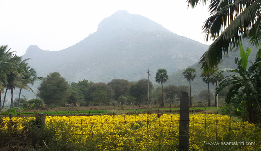 "A close up of the holy Arunachala hill. ""The Maharshi called Arunachala the spiritual Heart of the world. Aruna, which means 'red, bright like fire', does not signify the mere fire that gives off heat. Rather, it means Jnanagni, the Fire of Wisdom, which is neither hot nor cold. Achala signifies hill. Thus, Arunachala means 'Hill of Wisdom'. To read more <a href=""http://www.sriramanamaharshi.org/arunachala-hill/divinity/