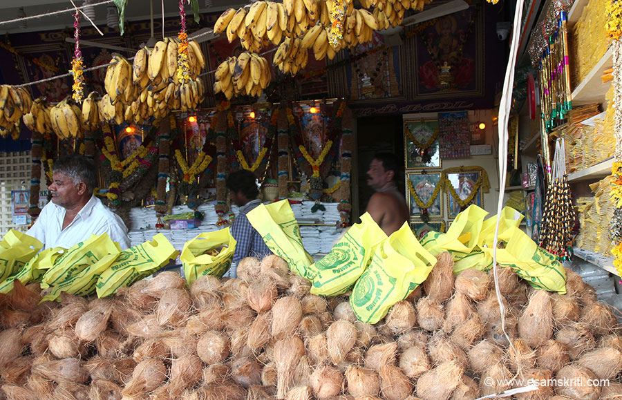 "Coconuts for darshan. To read about the Principal Sanctum <a href=""http://tiruchendur.org/mulasthanam.htm