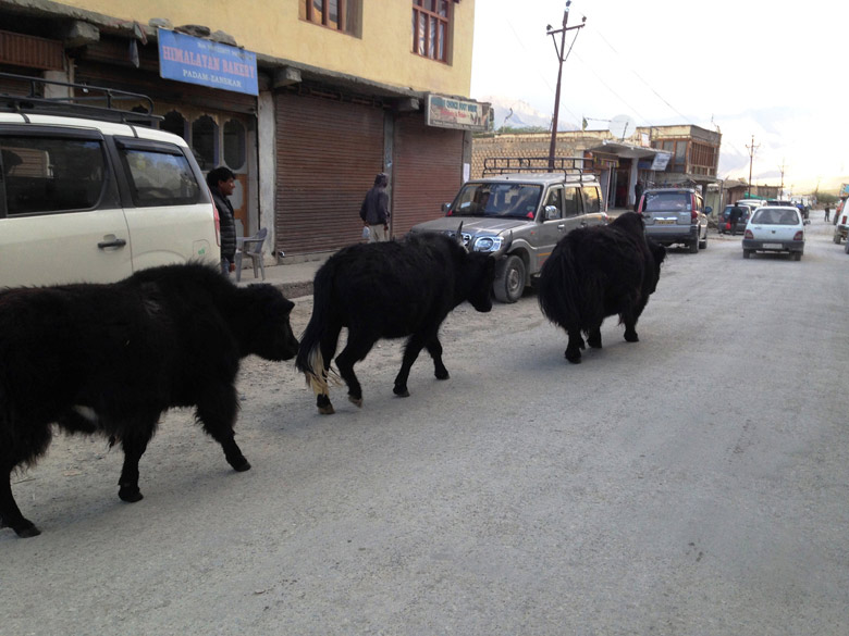 Traffic in the street. A very common sight, as in any Indian city, a line of Yaks walking through main bazaar street.