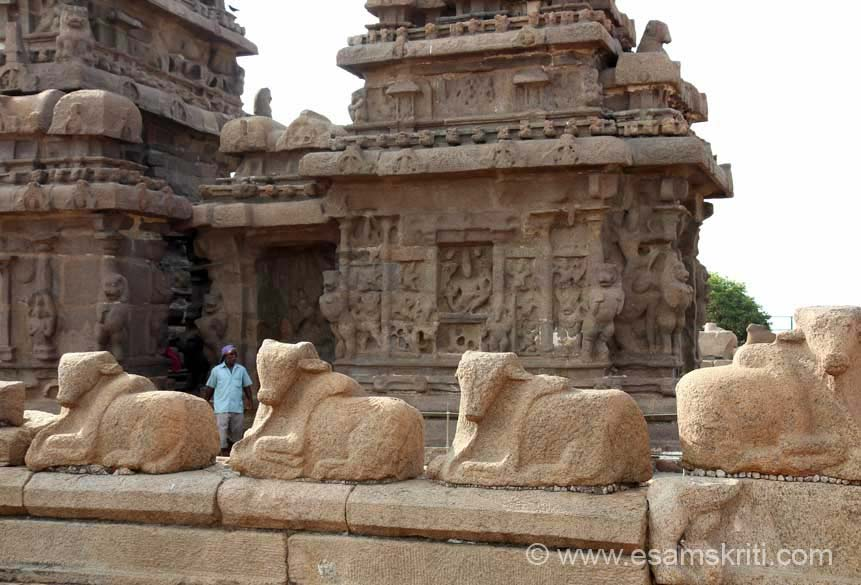 Close up of stone images of Nandi. In most parts they are around the temple even today.