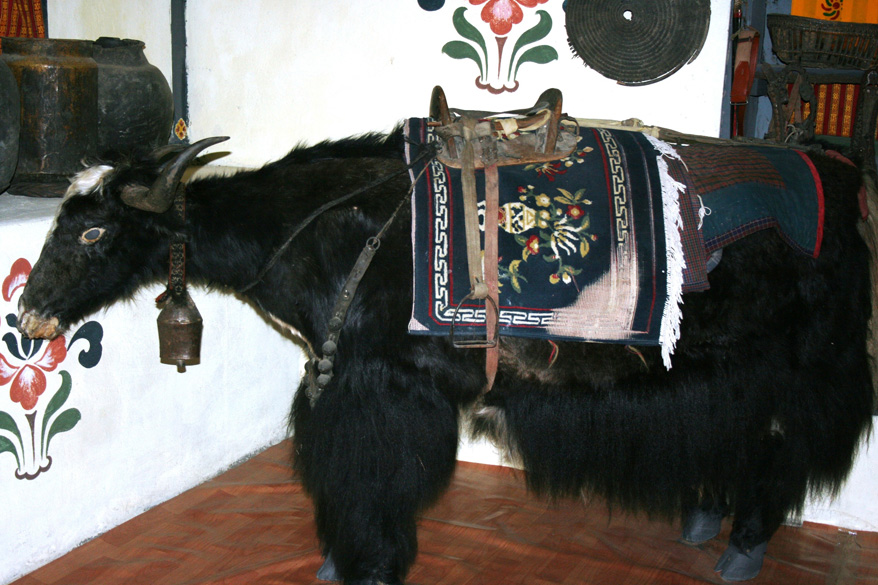 The Druk Home Museum in Paro is worth a visit. It is a completely private museum, set up by a family. This is a stuffed Yak from that museum.