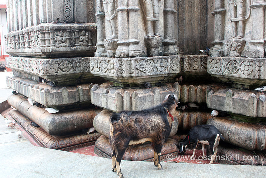 """View of lower portion of temple. As I said goat, sheep and birds all over the temple. To see photos of festival in temple <a href=""""http://www.rediff.com/news/slide-show/slide-show-1-photos-kamakhya-temple-door-shuts-for-mega-fest/20120622.htm"""" target=""""_blank"""">Click here</a>"""