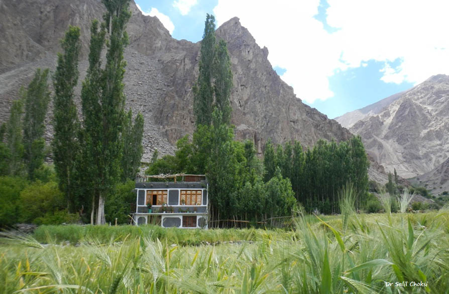 A Balti house (with Tibetan architectural influence), surrounded by stately Poplars , set in a barley field.