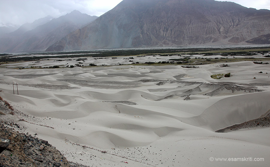 From Khardungla to Khalsar is 58 kms. From here u turn to Diskit and Hunder. It is a wow drive through Shyok and Nubra valleys. It was raining so made it more enjoyable although difficult for photography. No complaints great experience. Sand Dunes Nubra at 10,500 feet.