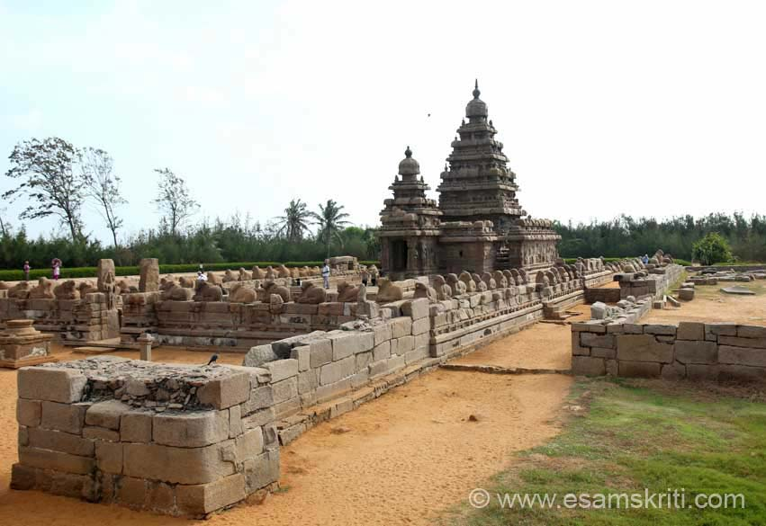 Visited Shore Temple way back in 2003. This was my second visit. Still looked as nice. Actually better this time. U see overview. This temple is an eg of  masonry temple of Rajasimha``s time. The Vimana top here is somewhat narrow and elongated unlike that of the Kailasanatha temple Kanchipuram.