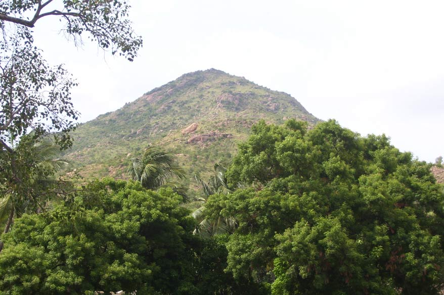 "You see Arunachala Hill. Devotees do a 16 km Parikrama (called Girivalam in Tamil) or walk round the holy mountain. The number of devotees increases on full moon night. On the day of Kartik Purnima there are a larger number of devotees. This Karthikai Deepam is celebrated as a ten day festival and it widely known as Karthikai Brahmotsavam. A flame is lit on the top of the holy hill during this festival. To know details of how the 10 day festival is celebrated <a href=""http://www.thiruvannamalai.in/tiruvannamalai-temple/tiruvannamalai-karthigai-deepam.html"" target=_blank>click here</a>"