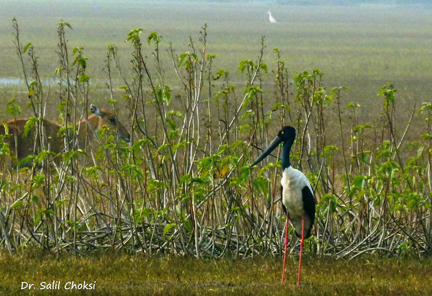 "You see Black Necked Stork. To see pics of Drive from Srinagar to Leh by Dr Choksi  <a href=""http://www.esamskriti.com/photo-detail/Drive-Srinagar-to-Leh.aspx"" target=""_blank"">Click here</a>"