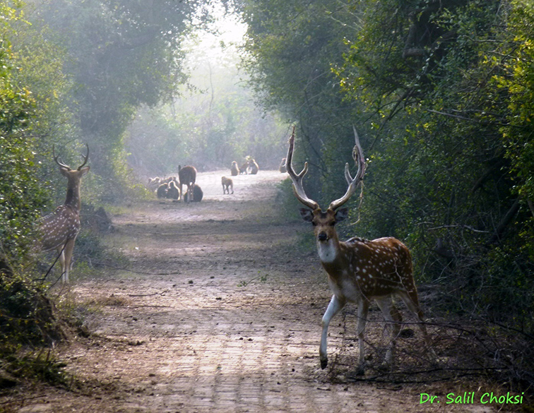 "You see Spotted Deer (with velvet on antlers). To see video of Bharatpur Bird Sanctuary <a href=""https://www.youtube.com/watch?v=0qWAP6sC9uo "" target=""_blank"">Click here</a>"