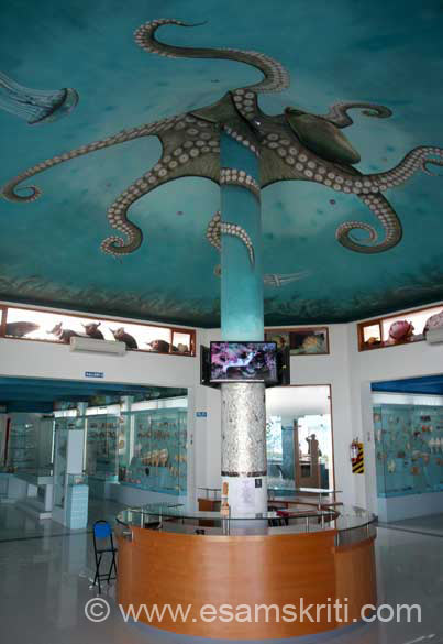 """Fossils, shark teeth and whale fins are the other items of display. My favourites at this museum are the car, ship and train made out of oyster shells"". To know more 
