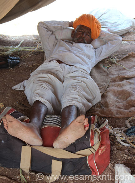 Animals traded are cows, bullocks, camels and horses. Cold it was but very sunny in the afternoon. U see this man having a good nap at about 1pm in the afternoon. The Fair is held on both sides of the road. One side is cows and bullocks whilst the other is camels and horses.