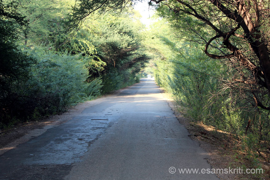 "As we drove along the tarred road was amazed to see the area so green and roads covered with trees. Weather so pleasant and enjoyable. ""The Canal is a major step in reclaiming the Thar Desert and checking desertification of fertile areas."""