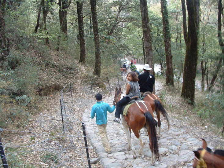 Tejaswini looks back for the shot during a horse-ride through the Kumaon forests at Nainital.