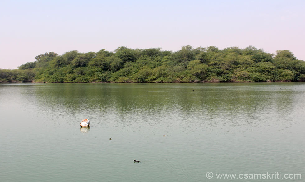 A view of the lake from Gajner Palace. It is a huge lake with greenery on all sides. Part of the complex is a 6,000 acre wild life sanctuary. U can go for nature walks, desert safaris, boat-rides (solar powered boat), sanctuary dinners etc. ``Sri Ganga Singh was a avid wildlife conservator. He introduced different breeds of deer and birds into the state sanctuaries, had wildlife preserves replanted, and ensured that wardens were posted to prevent poaching.``