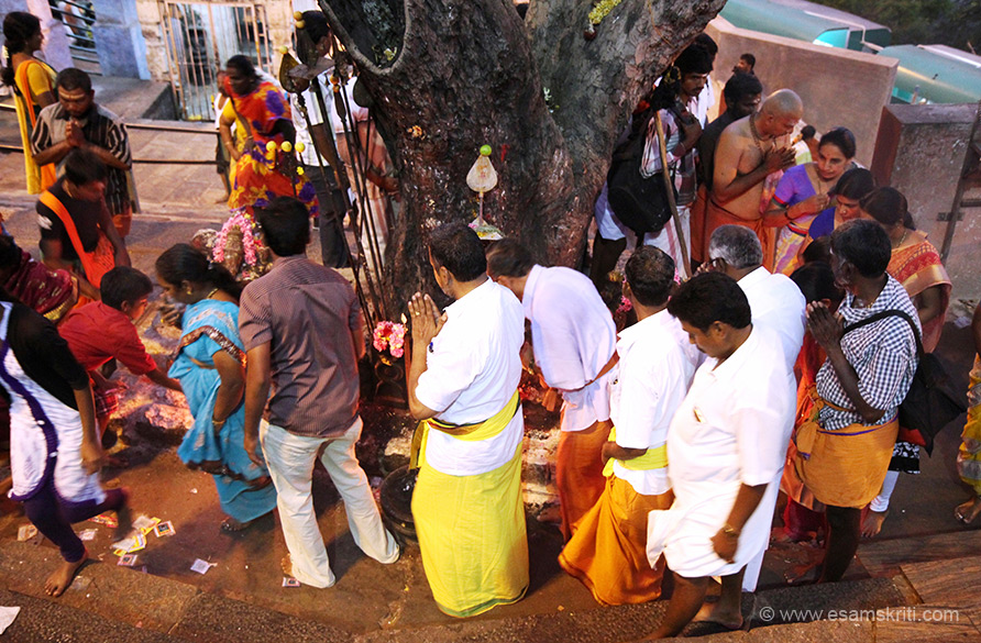 Just before the main temple is a tree where devotees make offerings. Attracts large number of devotees. U can go by steps or aerial rope way. There is a road running around the hill for Giri Pradakshina - we missed that.