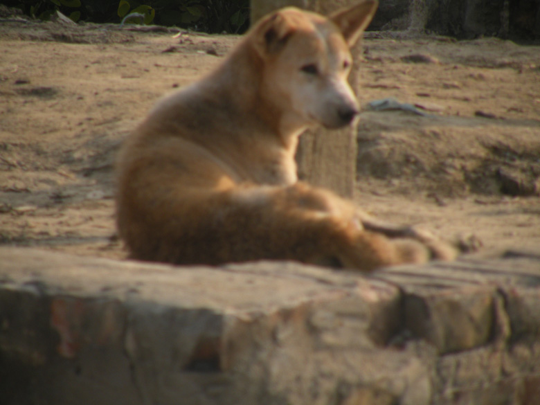 A village dog awaits our boat arrival.