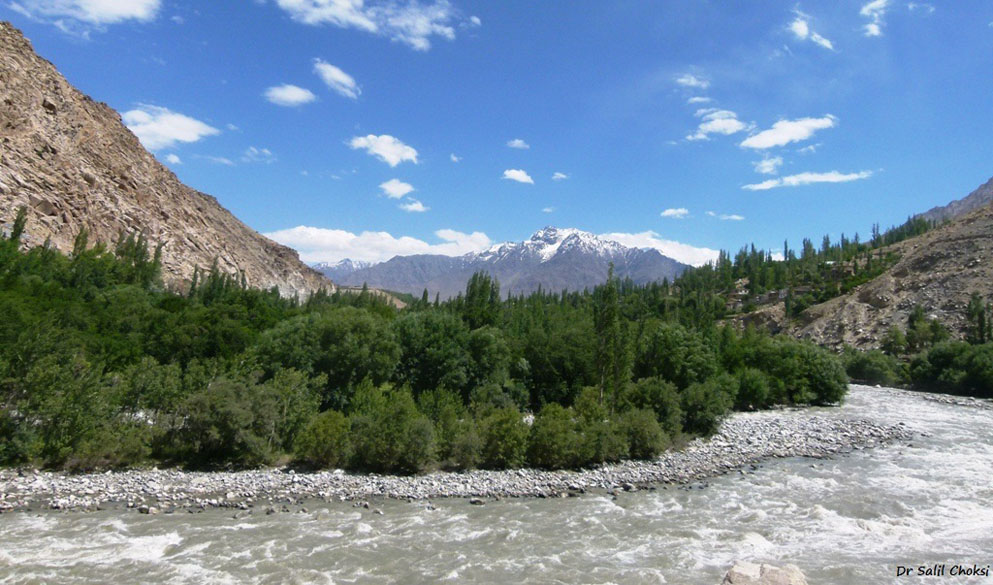 Riverine patch of Poplars and Willows - Suru river, before Kargil.