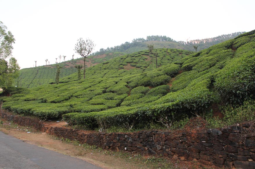 Another tea garden, background is a small hill. Also drove thru coffee plantations. We left Moodbidri about 3.45pm and reached Hornadu at about 7.30pm. Hornadu is situated in the Western