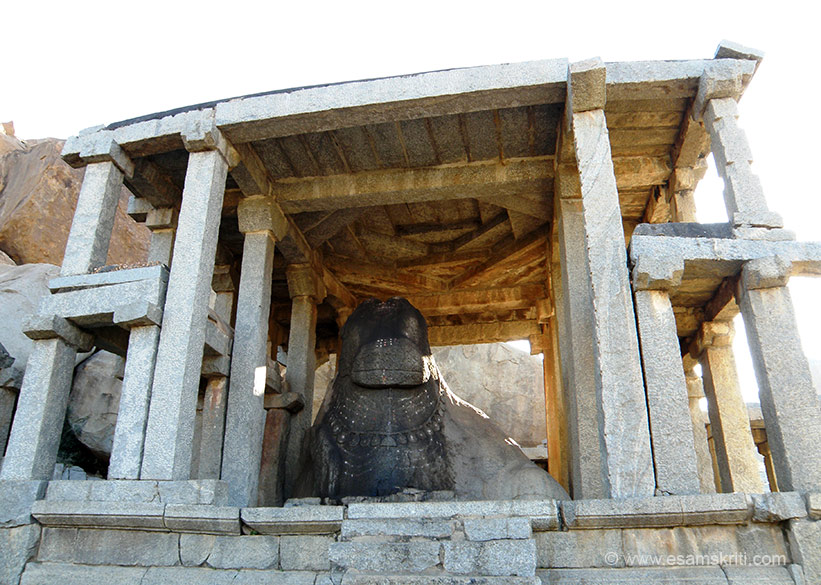 If Virupaksha temple is at one end of the market this Monolothic Bull at the other end. It is locally known as Yeduru Basavanna or Nandi. As you can see the statute is housed in a twin storied pavilion ie  