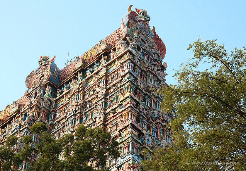 "Side top view of east gopuram. Lots of trees on east and west side. Gives you a idea of the size at a higher level. ""The Meenakshi shrine is one of the 51 Shakti peetams. It is one of the 