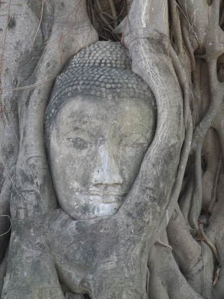 A close up of Buddha image in the tree.