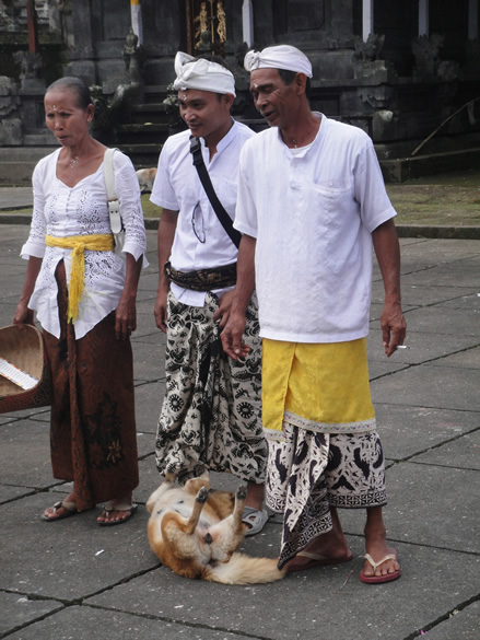 A Balinese family come to worship. The woman is wearing a long-sleeved, lacy blouse called a kebaya. Both the men and woman are wearing a cloth, called a kamben, usually batik, wrapped around the waist, wrapped differently by men and women. Men wrap the cloth around their waist with a fold in the front, whereas women wear it tightly around their hips with no drapes.The purpose of adat dress is to control some of these desires and to focus attention on a higher purpose while in places of worship and during ceremonies. Adat dress therefore symbolically and functionally harnesses the lower instincts.