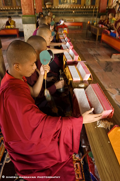 Prayer session for young Buddhist monks.